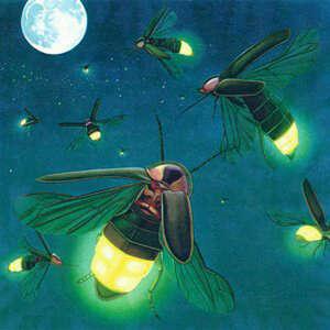 kunang-kunang